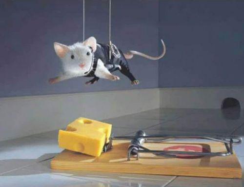 Tél és az egerek – mit tegyünk?