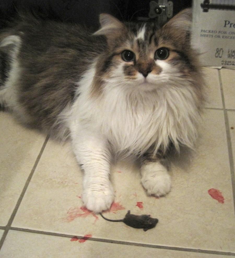 Végy egy macskát s egérgondod tovaszáll!