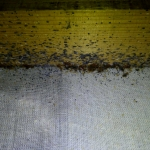 Ezen a képen komoly fertőzöttség látható. A petéktől a kifejlett példányokig minden megtalálható. A fekete pontok az ágyi poloskák ürülékei.