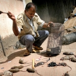 Mumbai patkányvadászok