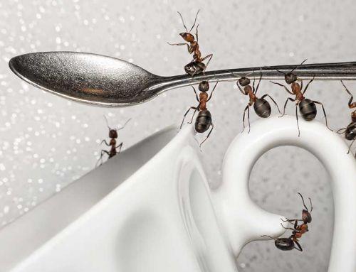 Újabb tippek hangyák ellen