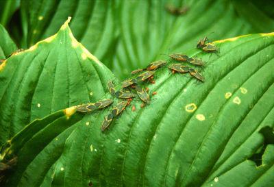 Növényi kártevők
