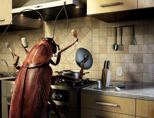 Ezek a dolgok csalogatják ősszel a bogarakat az otthonainkba