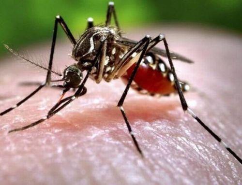 Hogyan tartsuk távol a szúnyogokat? Tippek a szúnyogok ellen