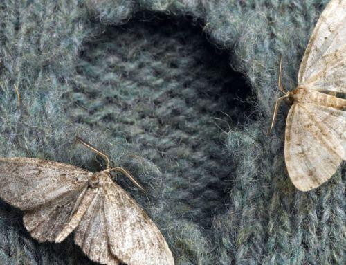 A háziasszonyok legnagyobb ellensége: a moly és a zsizsik