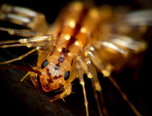 6 rovar, amellyel a legtöbb ember már összefutott az otthonában