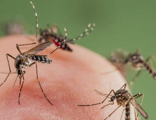 Mit történik, ha megcsíp bennünket egy szúnyog? Hogyan enyhíthetjük a kellemetlen viszketést?