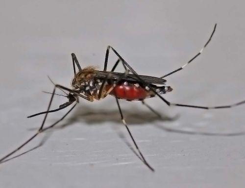 Szúnyogirtás 2020. – Megszűnik a légi szúnyoggyérítés