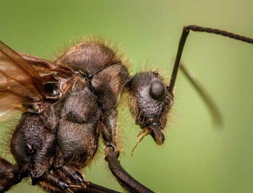 Miért jelenhetnek meg szárnyas hangyák az otthonában?