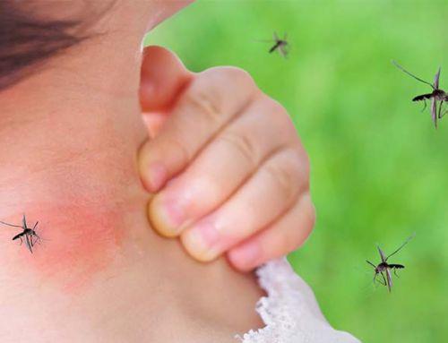 Fertőzött szúnyogok – így kerüljük el őket