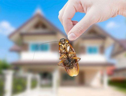 Hány bogárral élünk együtt a lakásban?